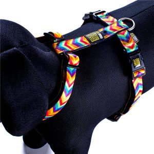 Max & Molly Summer Time Harness M MM125015